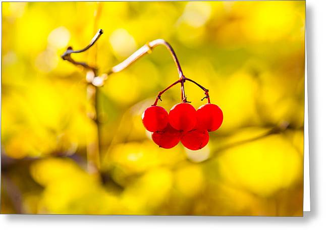 Greeting Card featuring the photograph Viburnum Berries - Natural Olympic Emblem by Alexander Senin