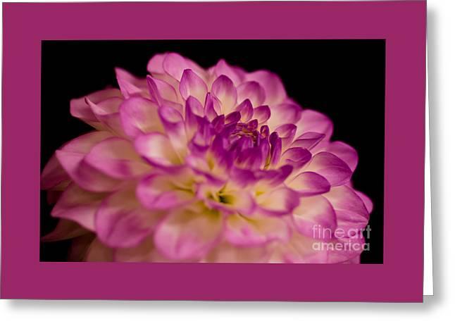 Victoria Ann Greeting Card by Nick  Boren