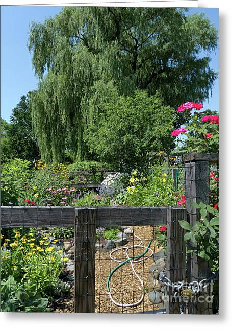 Victory Garden Lot And Willow Tree, Boston, Massachusetts  -30958 Greeting Card