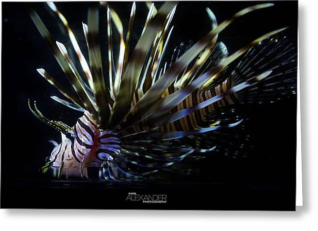 Vieques Lionfish Profile #1 Greeting Card by Karl Alexander