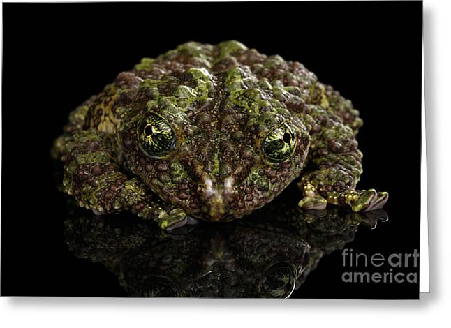 Vietnamese Mossy Frog, Theloderma Corticale Or Tonkin Bug-eyed Frog, Isolated On Black Background Greeting Card