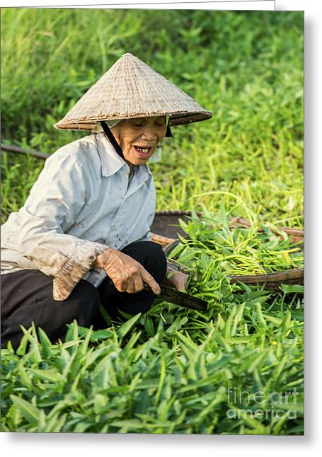 Vietnamese Woman In Rice Paddy Greeting Card by Juli Scalzi