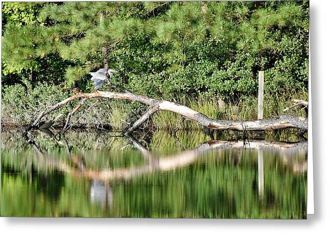 View From Shell Mill Road Greeting Card by Kim Bemis