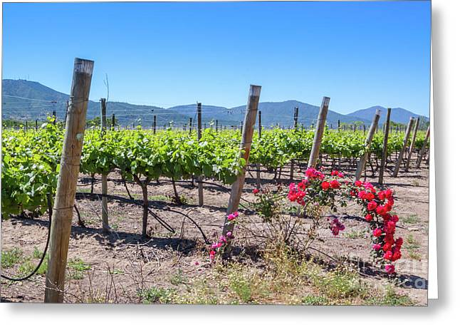View From The Winery With The Roses, Casablanca, Chile Greeting Card by Anna Soelberg