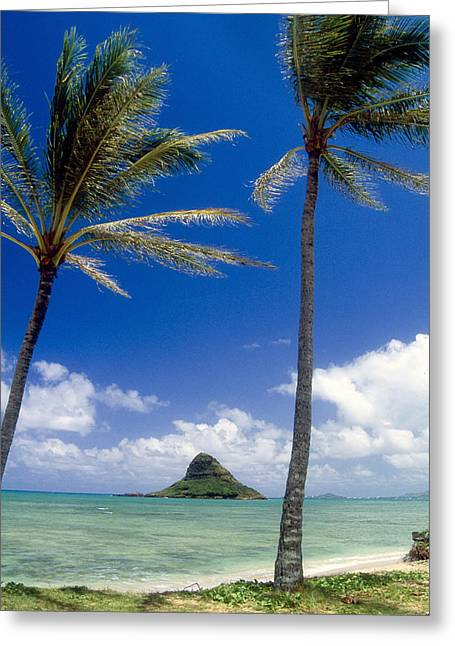 View Of A Bay With Palm Trees Kaneohe Bay Oahu Hawaii Greeting Card by George Oze