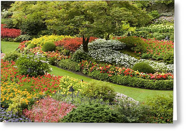 Butchart Gardens Greeting Cards - View Of Butchart Gardens In Bloom Greeting Card by Tim Laman
