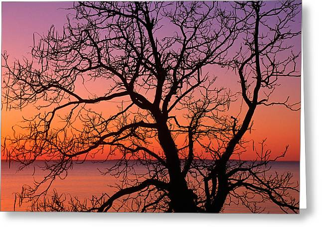 View Of Ocean Through Silhouetted Tree Greeting Card by Panoramic Images