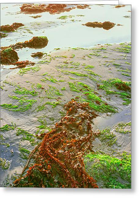 View Of Seaweed On The Beach, Las Greeting Card by Panoramic Images