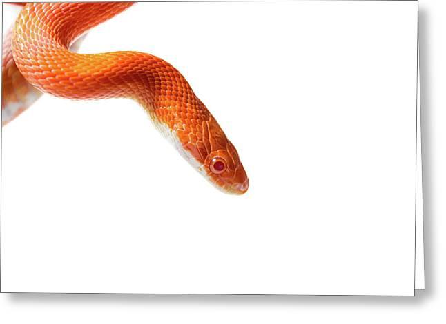 View Of Snake Greeting Card by Svetlana Svetlanistaya