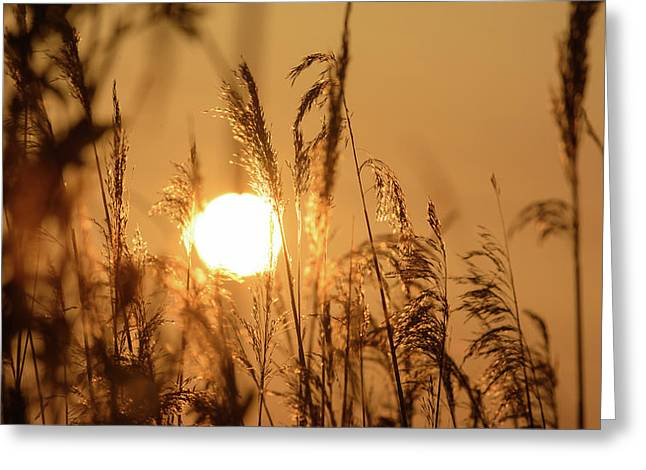 View Of Sun Setting Behind Long Grass B Greeting Card