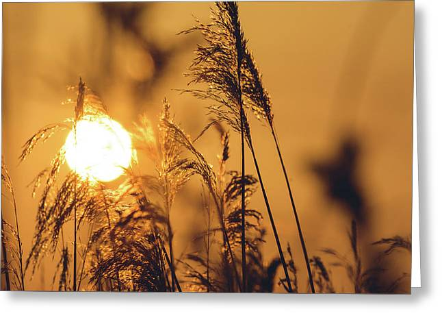 View Of Sun Setting Behind Long Grass C Greeting Card