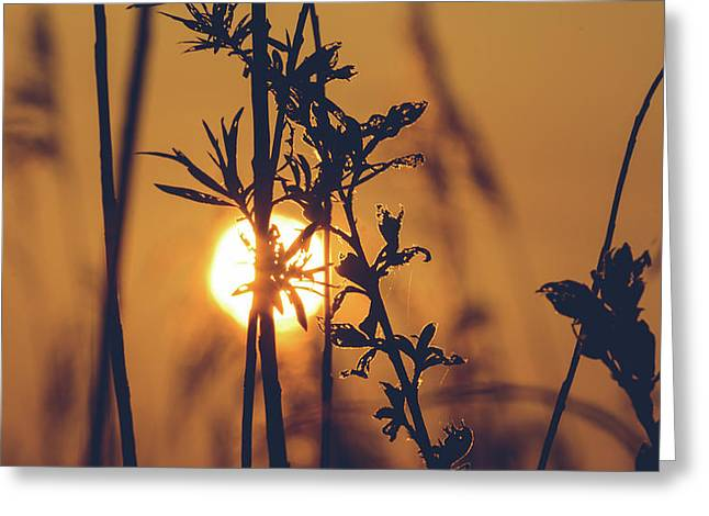 View Of Sun Setting Behind Long Grass D Greeting Card