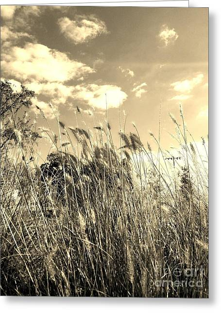 View Of The Field Mouse - Sepia Greeting Card