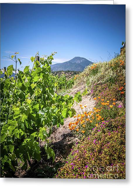 Vineyard View With Flowers, Winery In Casablanca, Chile Greeting Card