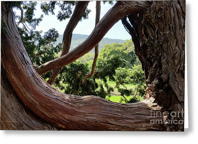 View Through The Tree Greeting Card by Carol Lynn Coronios