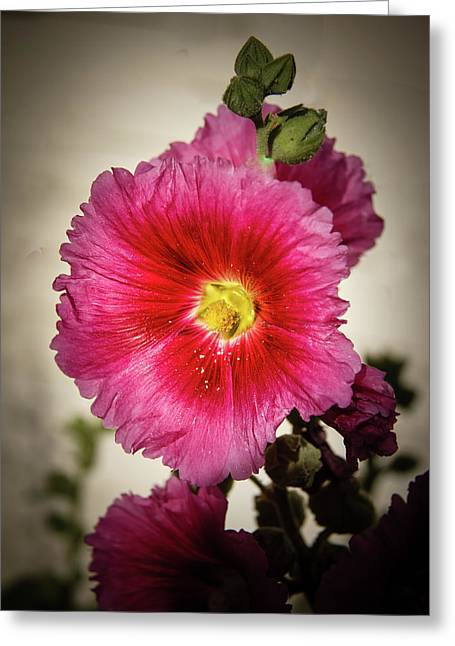 Vignetted Hollyhock Greeting Card by Robert Bales