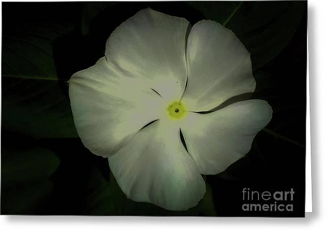 Vinca Bloom Night Glow Greeting Card