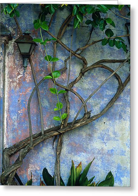 Architecture Framed Prints Greeting Cards - Vine and Wall Greeting Card by Kathy Yates