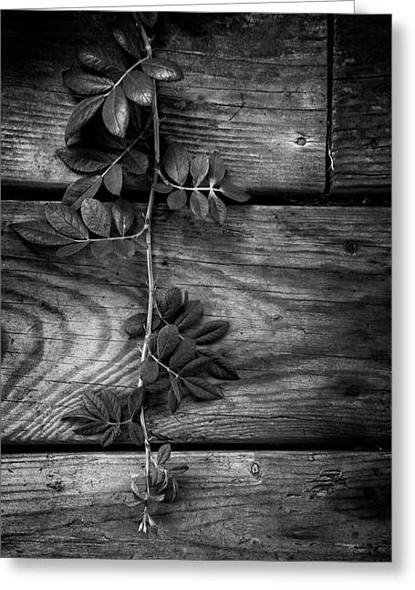 Vine On Barn Greeting Card by Greg Mimbs