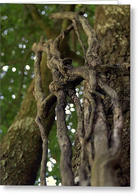 Vine On Tree Greeting Card