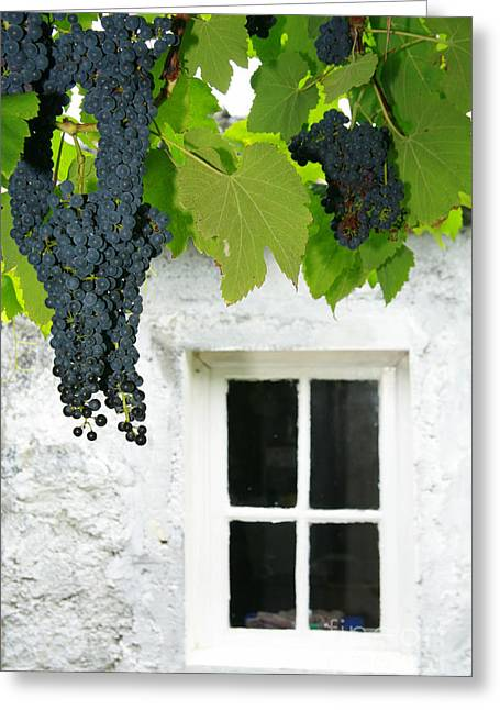 Vines In The Backyard Greeting Card