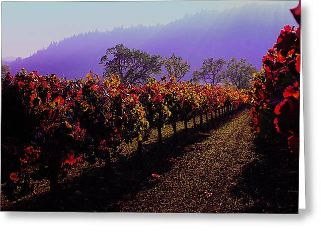 Grapevines Photographs Greeting Cards - Vineyard 15 Greeting Card by Xueling Zou