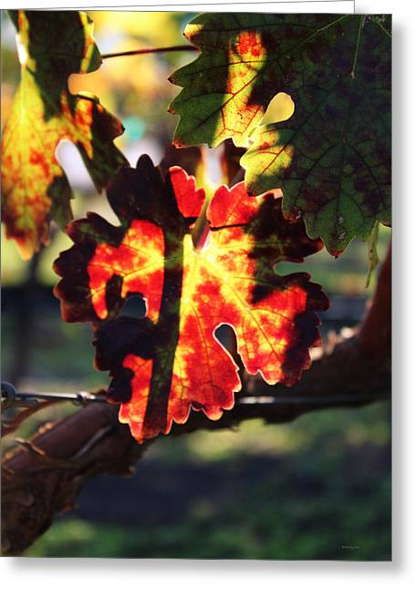 Grapevines Photographs Greeting Cards - Vineyard 26 Greeting Card by Xueling Zou