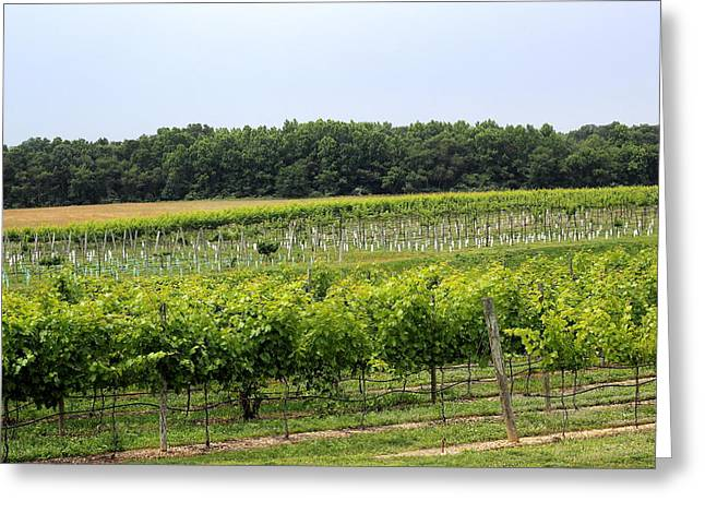 Relaxing Vines Greeting Card