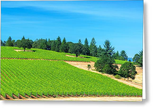 Vineyard And Pine Trees Greeting Card