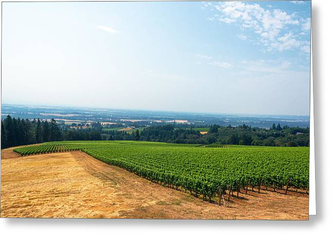 Vineyard And Willamette Valley Greeting Card