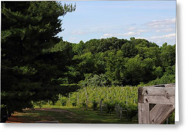 Vineyard Greeting Card by Brian Manfra