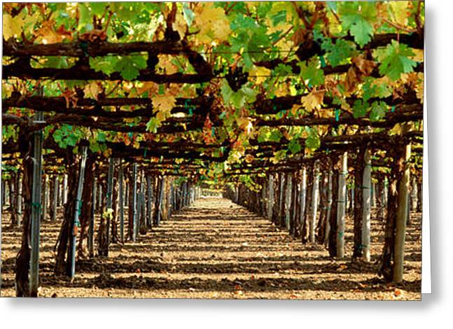 Vineyard Ca Greeting Card by Panoramic Images