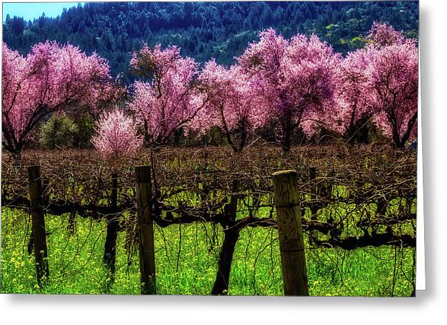 Vineyard Cherries Greeting Card by Garry Gay