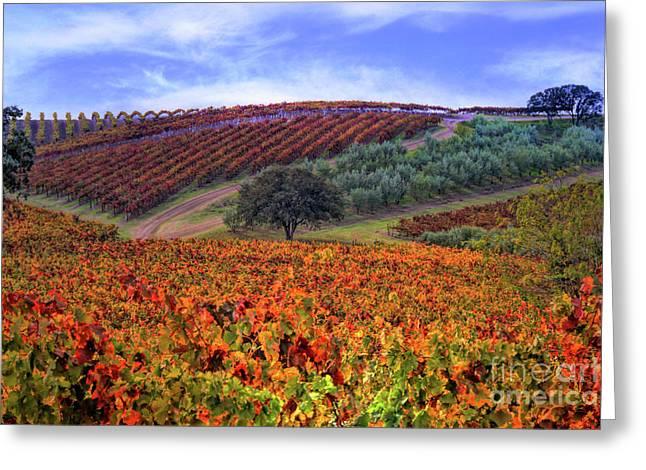 Vineyard Color Greeting Card