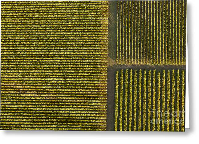 Vineyard From Above Greeting Card by Diane Diederich