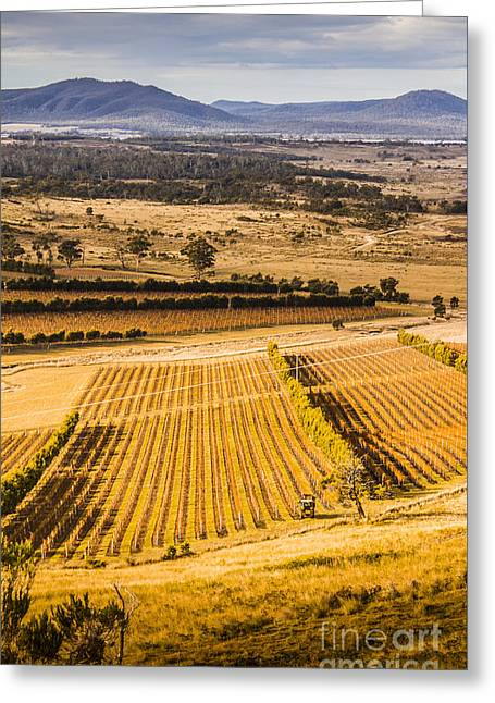 Vineyard Harvest Landscape Greeting Card