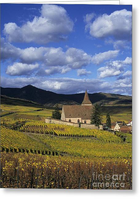 Vineyard In Alsace, France Greeting Card