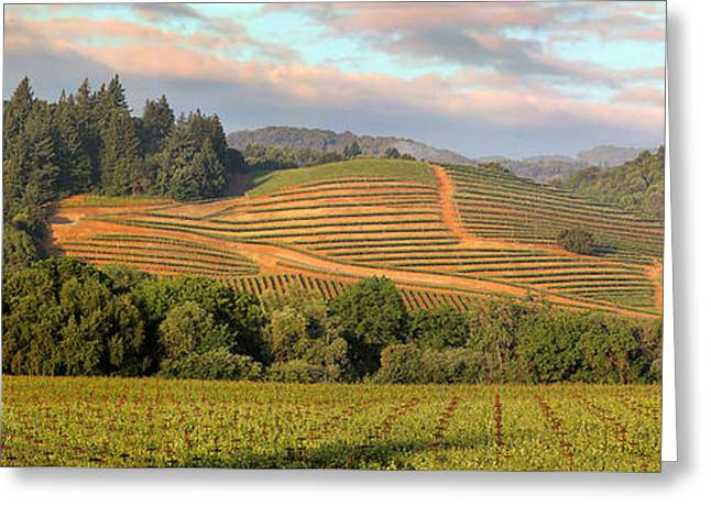 Vineyard In Dry Creek Valley, Sonoma County, California Greeting Card