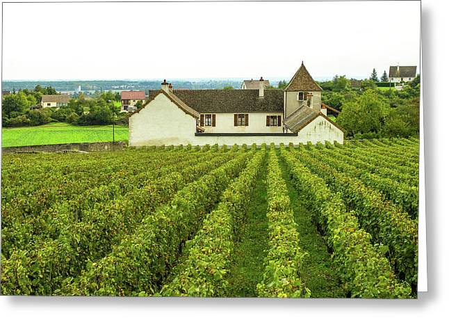 Greeting Card featuring the photograph Vineyard In France by Jim Mathis