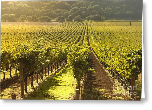 Vineyard In Napa Valley Greeting Card