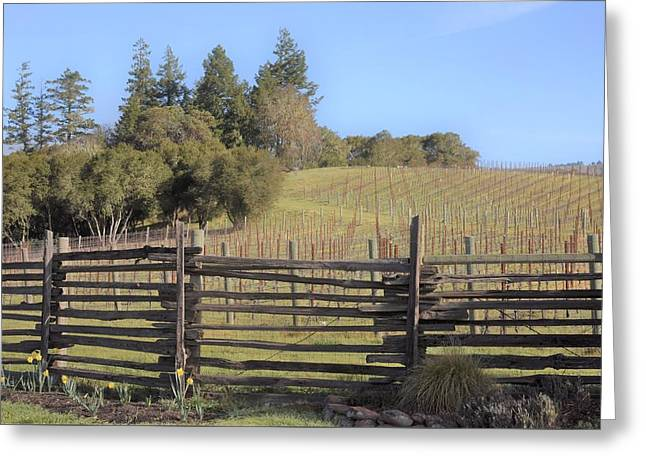 Vineyard In The Spring Greeting Card