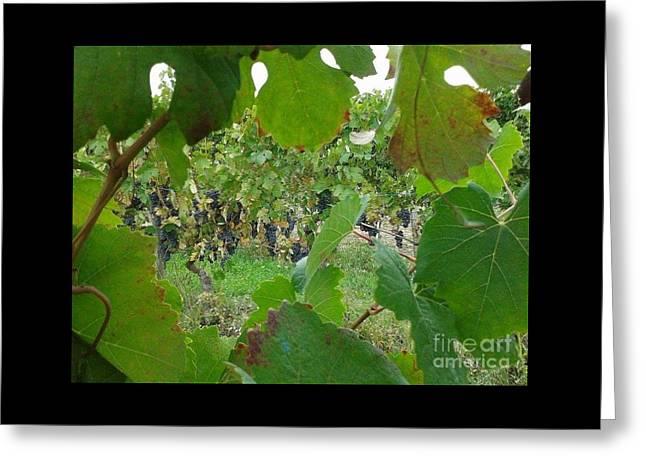 Vineyard  Greeting Card by Iolanda Schena