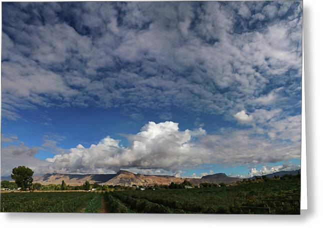 Vineyard Greeting Card by Jerry LoFaro