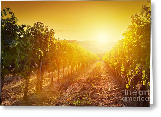 Vineyard Landscape In Tuscany Greeting Card by Michal Bednarek