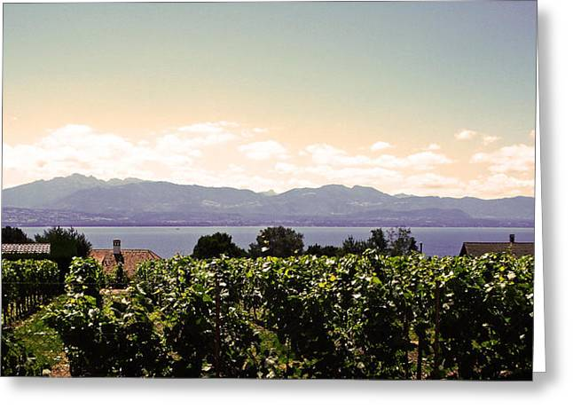 Vineyard On Lake Geneva Greeting Card by Jeff Barrett