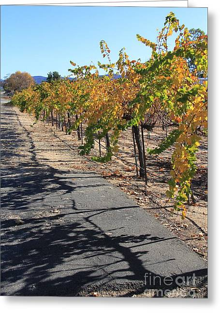 Vineyard Shadows Greeting Card