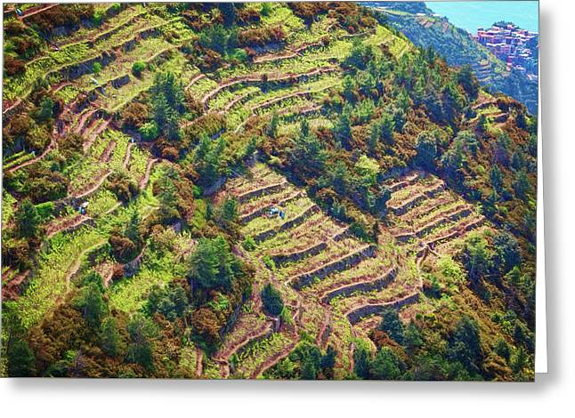 Vineyard Terraces Cinque Terre Italy Greeting Card by Joan Carroll