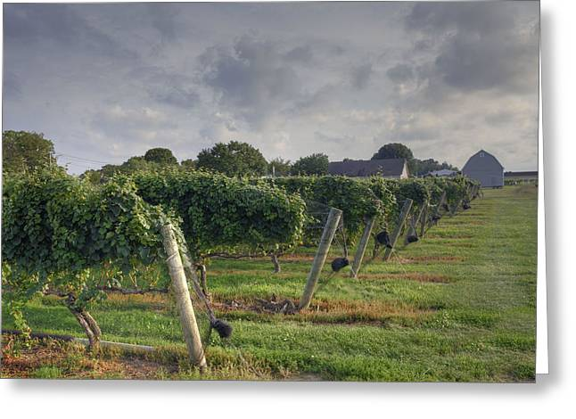 Vineyard With  Barn Greeting Card