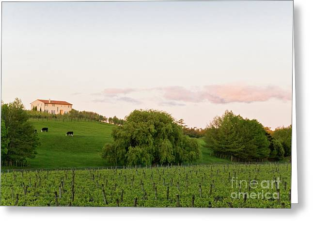 Vineyard Greeting Card by Yurix Sardinelly