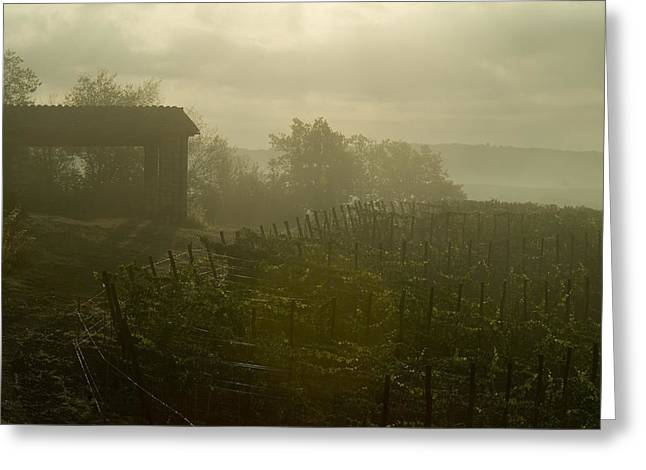 Vineyards Beside A Villa In The Fog Greeting Card
